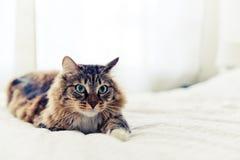 Серый лежать кота Стоковые Изображения RF