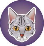 Серый значок кота Стоковая Фотография
