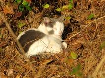 Серый и белый спать кота Стоковое фото RF