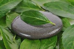 серый камень листьев Стоковое Изображение RF