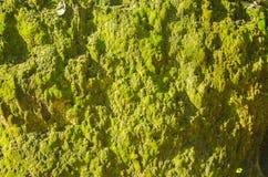 Серый камень покрытый лишайником Стоковые Фотографии RF