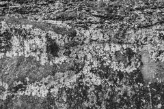 Серый камень покрытый лишайником Стоковая Фотография RF