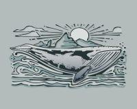 серый кит Стоковые Изображения