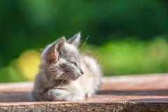Серый котенок в траве на запачканной зеленой предпосылке на утре стоковое изображение rf