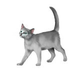 Серый котенок идет против белой предпосылки Стоковая Фотография