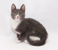 Серый котенок с белыми пятнами и желтым цветом наблюдает сидеть, поворачивая животики Стоковые Изображения