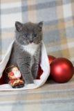 серый котенок santa шлема Стоковое Изображение