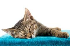 Серый котенок tabby лежа на поверхности голубого плюша мягкой стоковые фото