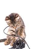 Серый котенок tabby жует на кабеле заряжателя на белой предпосылке Стоковая Фотография