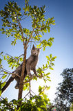Серый кот вверх в малом дереве, стоя свирепый Стоковое Изображение
