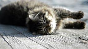 Серый кот греясь в солнце акции видеоматериалы