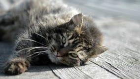 Серый кот греясь в солнце видеоматериал