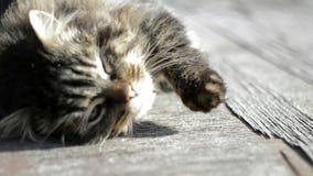 Серый кот греясь в солнце сток-видео