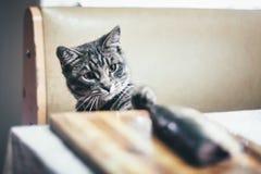 Серый кот и большая рыба на таблице Стоковое фото RF