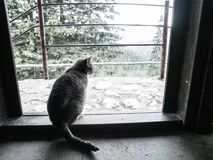 Серый кот на двери Стоковые Изображения