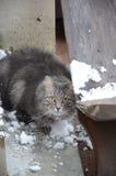 Серый кот на дому около закрытой двери Стоковые Изображения