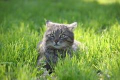 Серый кот на острове Венеции Burano Стоковые Изображения RF