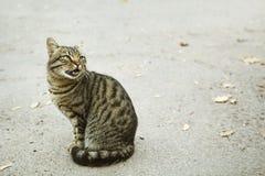 Серый кот на улице Стоковые Изображения RF