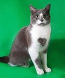 Серый кот при белые пятна сидя на зеленом цвете Стоковое Фото