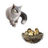 Серый кот при зеленые глаза охотясь, воробьи младенца внутри Стоковые Изображения