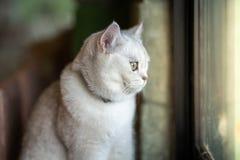Серый кот сидит вне смотрящ вне окно Изнутри комнаты в доме стоковые изображения rf