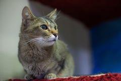 Серый кот сидя внутри помещения стоковое изображение rf