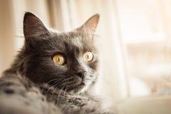 Серый кот сидя на windowsill стоковые фото