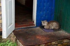 Серый кот сидя на половике на пороге около открыть двери Стоковое Фото