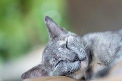 Серый кот спать на деревянном столе Стоковые Фотографии RF