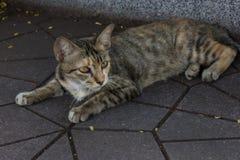 Серый кот спать на улице Стоковое Изображение RF
