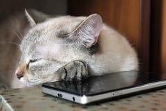 Серый кот уснувший, лежа голова на smartphone Стоковые Изображения RF