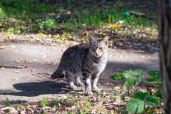 Серый кот улицы на земном пути Стоковые Изображения RF