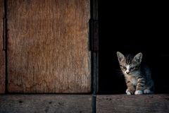 Серый кот Стоковая Фотография