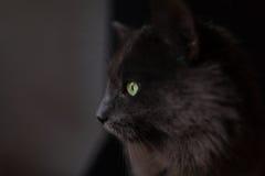 Серый кот Стоковые Изображения RF