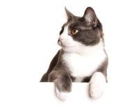 Серый кот Serie Стоковое Изображение RF