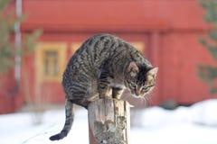 Серый кот tabby сидя на столбе Стоковые Фотографии RF