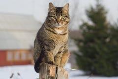 Серый кот tabby сидя на столбе Стоковая Фотография RF