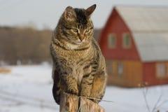 Серый кот tabby сидя на столбе Стоковое Изображение