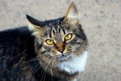 Серый кот tabby стоит и смотрит на улице Стоковые Изображения