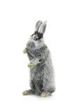 серый кролик Стоковые Фото