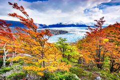 Серый ледник, Патагония, Чили Стоковые Фотографии RF