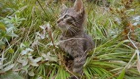 серый маленький одичалый кот пряча в высокой траве в лесе, конце-вверх сток-видео