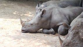Серый носорог стоковое изображение