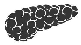 Серый панкреас Стоковое Изображение