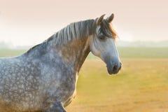 серый портрет лошади Стоковые Изображения RF