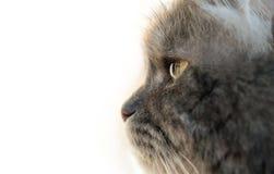Серый профиль кота стоковая фотография rf