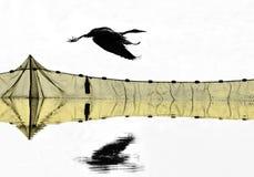 Серый силуэт 3 цапли Стоковая Фотография RF