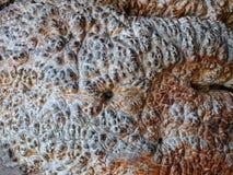 Серый старый шипучий напитк камень, структура сброса Bac утеса лавы Брайна Стоковая Фотография
