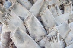 Серый хобот ладони Стоковые Изображения RF