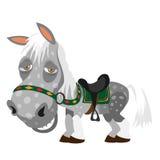 Серый цвет запятнал утомленную лошадь, животный стиль шаржа бесплатная иллюстрация